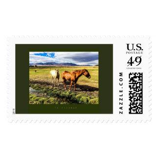 Western U.S. horses photography Postage