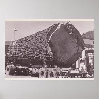 Western Washington Fir Log circa 1940 Poster