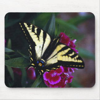 Western Yellow Swallowtail (2) Mouse Pad