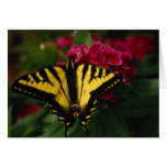 Western Yellow Swallowtail Greeting Cards