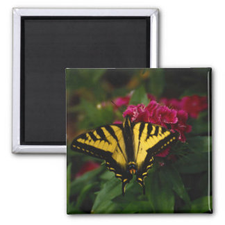 Western Yellow Swallowtail Magnet