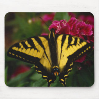 Western Yellow Swallowtail Mouse Pad