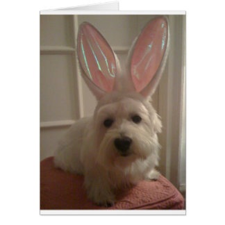 Westhighland Bunny Greeting Card