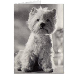 Westie blanco y negro tarjeta de felicitación