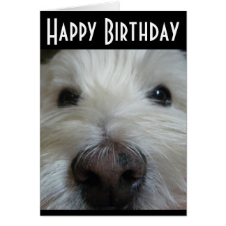 Westie Closeup Nose Photo Greeting Card