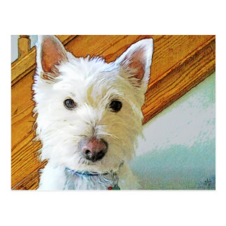 Westie Dog is Looking at You Postcard