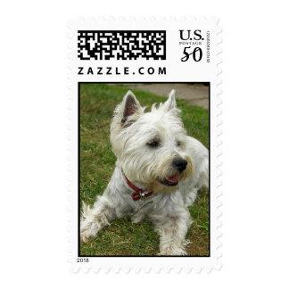 Westie Dog Postage Stamp