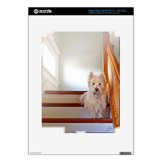 Westie Dog, Sitting Halfway Down Vintage Staircase Decal For iPad 3