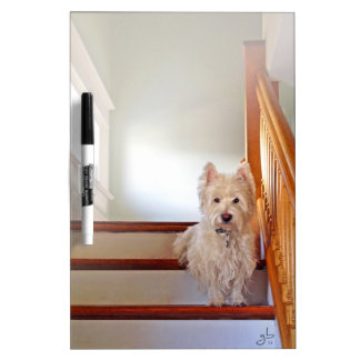 Westie Dog Sitting on the Stairs, Vintage Look Dry-Erase Board