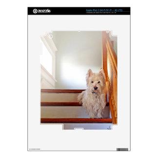 Westie Dog Sitting on the Stairs, Vintage Look iPad 3 Skin