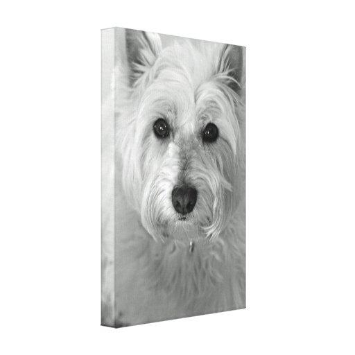 Westie Dog (West Highland White Terrier) Canvas Gallery Wrap Canvas