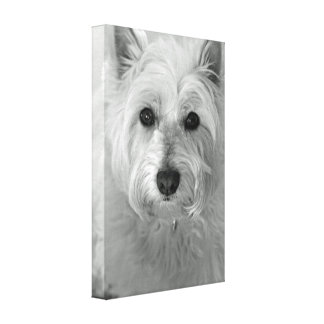 Westie Dog (West Highland White Terrier) Canvas