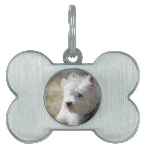 Westie en la primavera placa de mascota