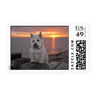 Westie en la puesta del sol sello