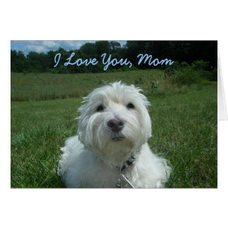 Westie I Love You Mom Happy Mother's Day Card