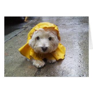 Westie in Yellow Rain Mac! Card