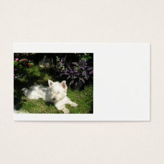 westie laying 3.png business card