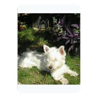 westie laying 3.png card