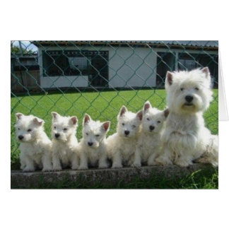 Westie Mother and Puppies Greeting Card