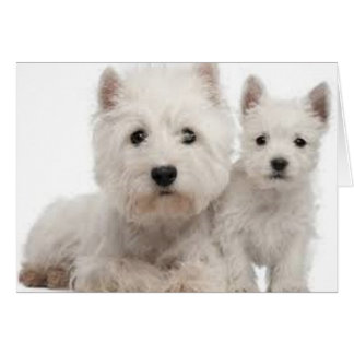 Westie Mother and Puppy Card