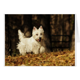 Westie on the move card
