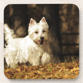 Westie on the move coaster