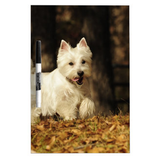 Westie on the move Dry-Erase boards
