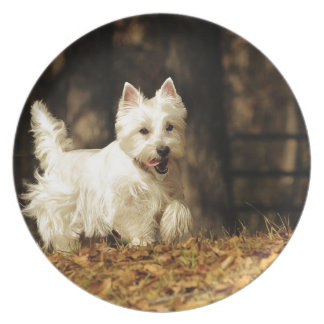 Westie on the move plate