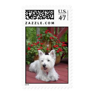 Westie Postage Stamp