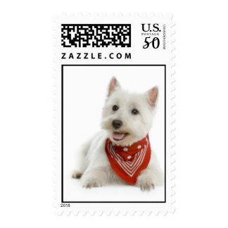 Westie Postage Stamps