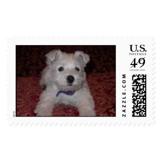 Westie Pup or Stuffed Animal Postage