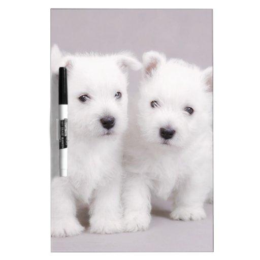 Westie puppies Dry-Erase whiteboards