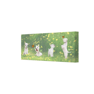 Westie  Puppies Take Time Out To Smell The Flowers Canvas Prints