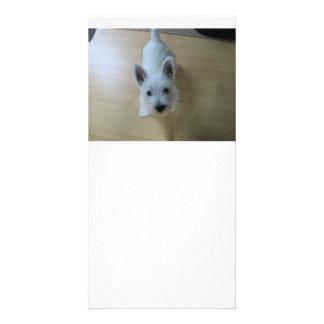 westie Puppy 3.png Card