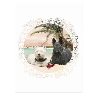 Westie & Scottie on Palmy Beach Postcard
