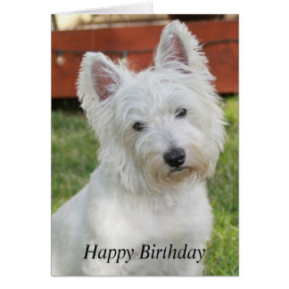 Westie, West Highland Terrier dog birthday card