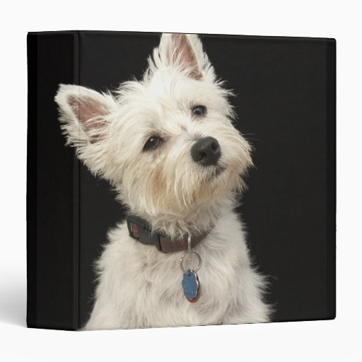Westie (West Highland terrier) with collar 3 Ring Binders
