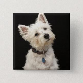 Westie (West Highland terrier) with collar Button