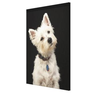 Westie (West Highland terrier) with collar Canvas Print