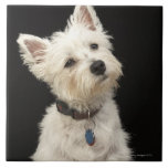 Westie (West Highland terrier) with collar Large Square Tile