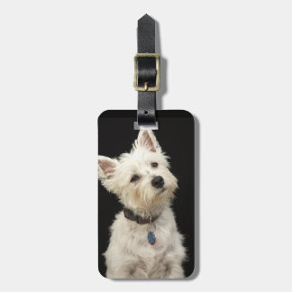 Westie (West Highland terrier) with collar Luggage Tags