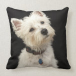 Westie (West Highland terrier) with collar Pillow
