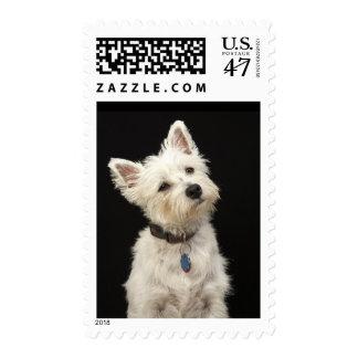 Westie (West Highland terrier) with collar Postage Stamp