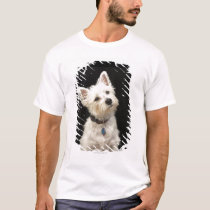 Westie (West Highland terrier) with collar T-Shirt
