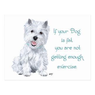 Westie Wisdom - Fat Dog? Postcard