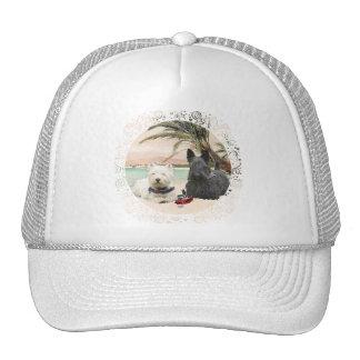 Westie y escocés en la playa con muchas palmas gorras
