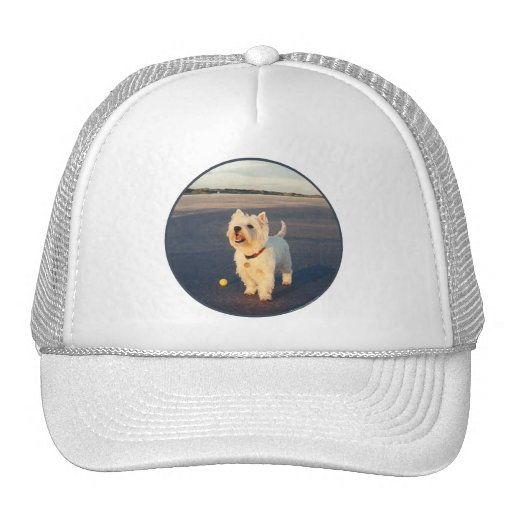 Westies and the Ocean Mesh Hats