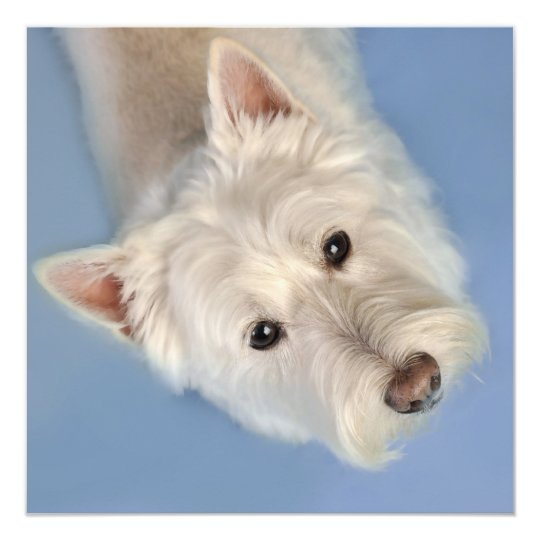 Westies Cards and Gifts