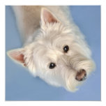 Westies Cards and Gifts Invites
