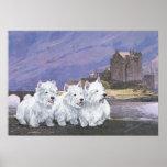 Westies en Escocia Poster